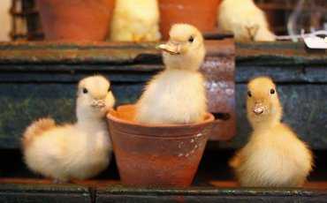 What's On This Weekend: Easter 2018, Chicks Life Drawing, Easter Egg Hunts and Peter Rabbit
