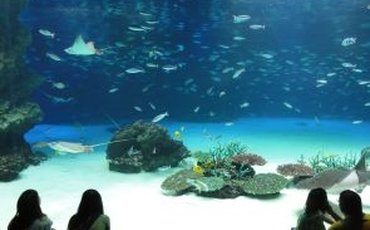 What's On This Weekend: Sea Life Lates, Julius Caesar & The Ethometric Pop-Up Museum