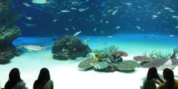 Sealife aquarium header image